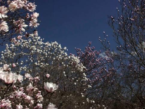 7sky_blossoms