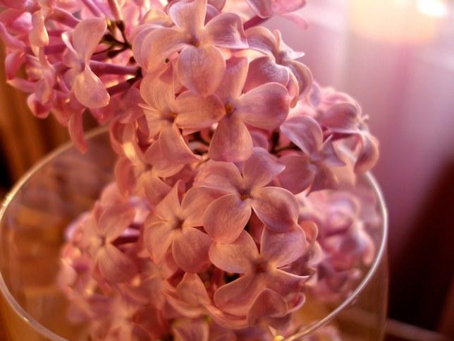 1wineglass_lilac